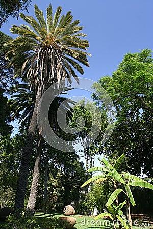 Madeira Gardens I