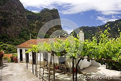 Madeira Mountains VII