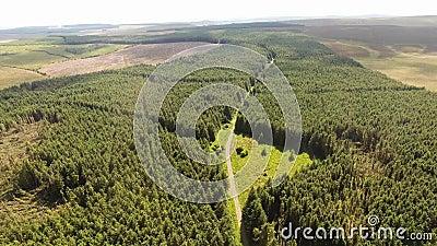 Madeiras de Capanagh Moss Bog Forest na Irlanda vídeos de arquivo