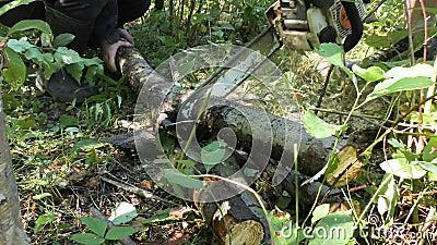 Madera del sawing con una motosierra almacen de metraje de vídeo