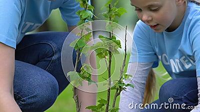 Madre e figlia volontari piantano alberi in parco, progetto sociale ecologico, natura video d archivio
