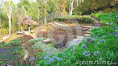 Mae Fah Luang Arboretum, Doi Chung Moob, Chiang Rai, Thaïlande banque de vidéos