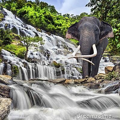 Free Mae Ya Waterfall Royalty Free Stock Photo - 33783305