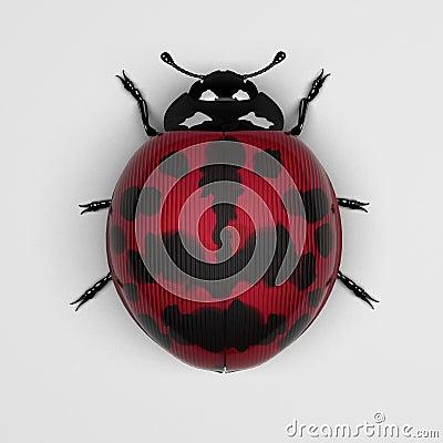 Magenta ladybird