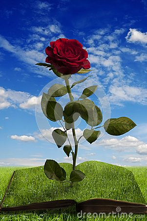 Free Magic Book With A Rose In Summer Landscape Stock Photo - 115505680