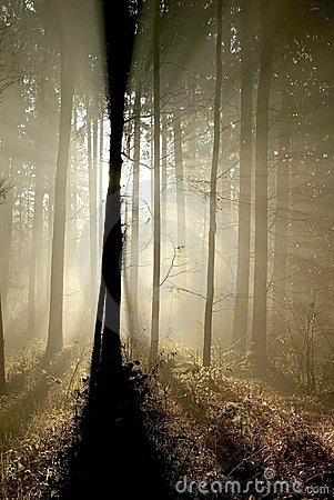 Free Magic Forest, Sun Rays Through The Trees Royalty Free Stock Image - 8389526