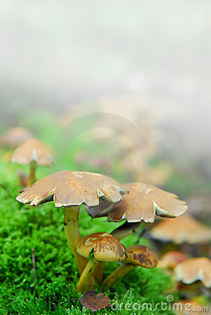 Magic mushrooms fog