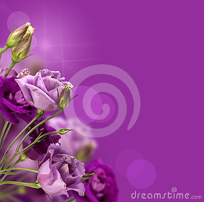 Magic purple flowers