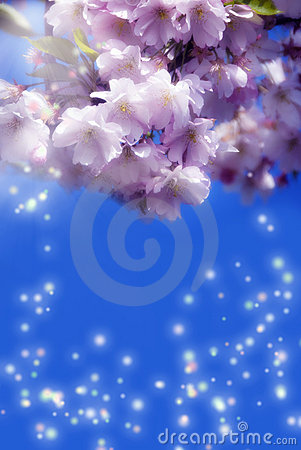 Free Magic Spring Stock Photos - 14039493