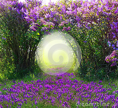Free Magic Spring Forest Stock Photo - 52617950