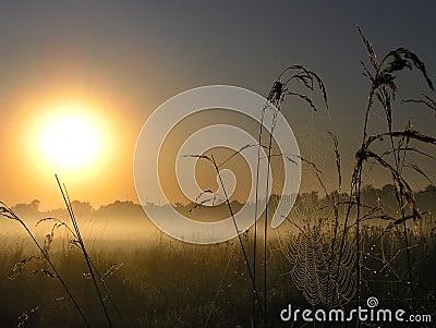 Magic Sunrise with a spider web