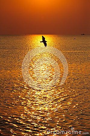Free Magic Sunset Royalty Free Stock Photography - 14529987