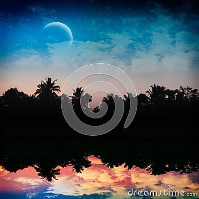 Magic tropical night