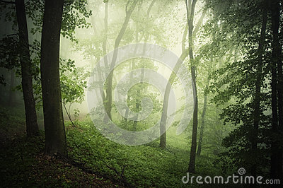 Magical green forest with fog in the summer