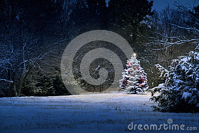 Magical snow covered Christmas Tree stands out bri