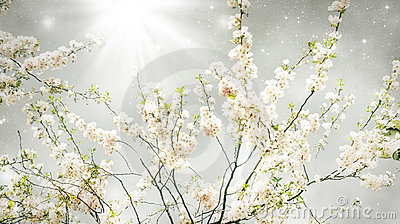 Magischer Frühling