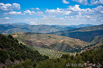 Magnificent panorama of surrounding olive