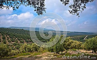 Magnificent panorama of Villanueva De Algaidas