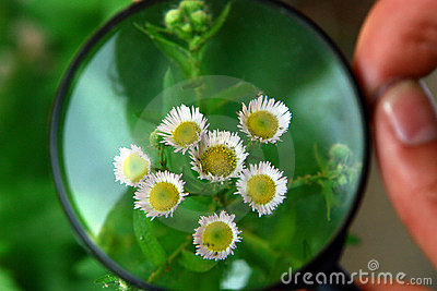 Magnifier on flower