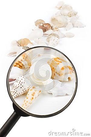 Magnifier on seashells