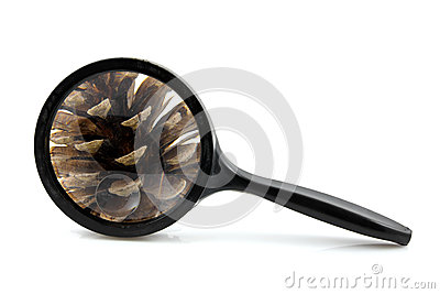 Magnifying glass with pine cone
