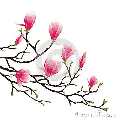 Magnolia blossom Vector Illustration