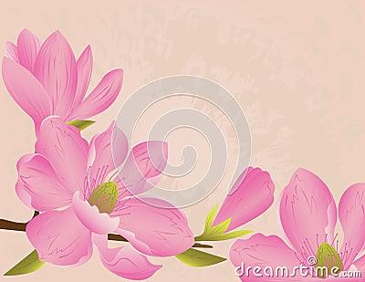 Magnolia blossom background Vector Illustration