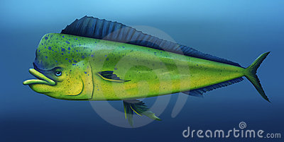 Mahi Mahi - Digital Painting