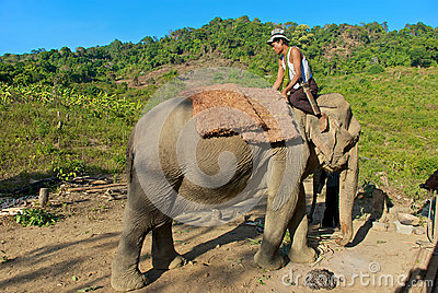 Mahout Editorial Stock Image