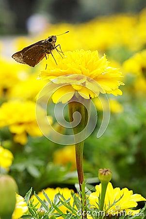 Free Maidenhair With Moth Stock Photo - 16184940