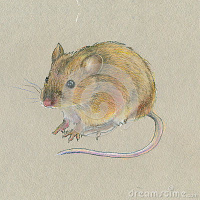 Main dessin souris sur le fond gris illustration stock for Peinture gris souris