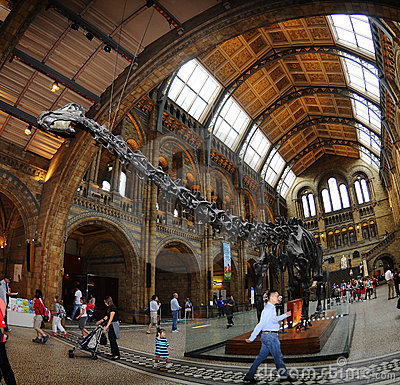 The main hall of the museum - dinosaur skeleton in Editorial Stock Photo