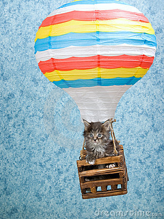 Maine Coon kitten in hot air balloon