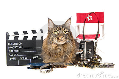 Maine Coon with movie props on white background
