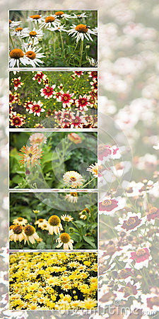 Maine flower collage