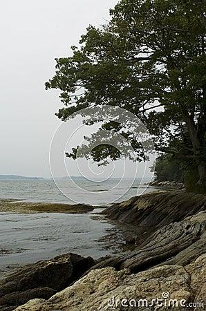Maine s Rocky Coast