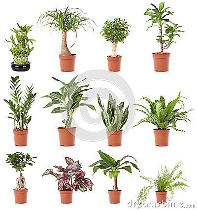 Maison de plante en pot image libre de droits image for Plante maison