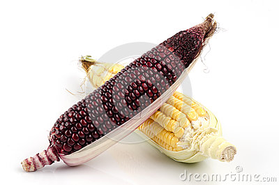 Maiz morado and corn grains are beneficial to the body.