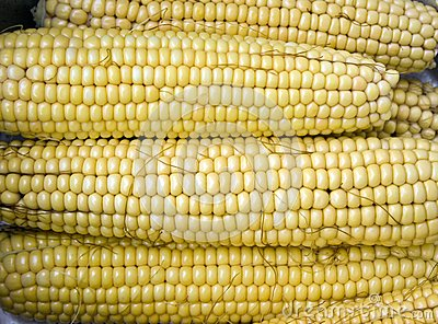 Maize Corncobs Stock Photos - Image: 26629143