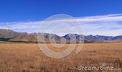 Maize fields frame New Zealand mountains