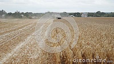 Maize grain harvester to gather corn on farmfield stock video footage