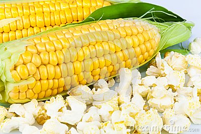 Maize and popcorn with leaves
