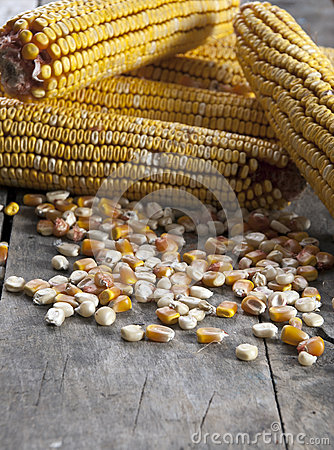 Maize on the wooden background