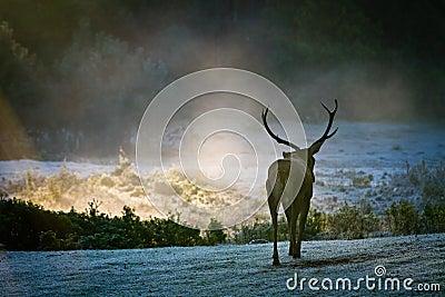 Majestic bull walking on the meadow