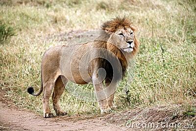 Logo Lion Standing On Hind Legs   Images Guru