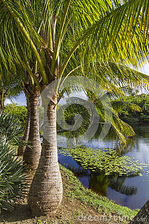 Free Majestic Palm Trees Royalty Free Stock Photo - 38144375
