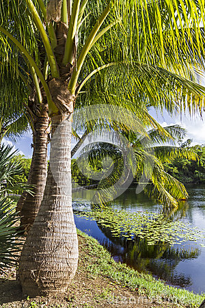 Free Majestic Palm Trees On Pond Royalty Free Stock Photos - 38144428