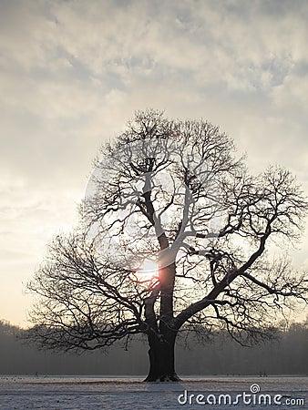 Majestic Winter tree