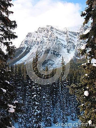 Majestueuze berg met een sneeuwbos 2