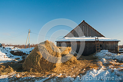Making hay on farm in winter on morning